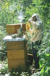Bienepflege4