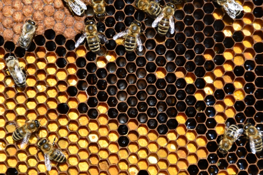 Frühjahrsdurchsicht und Honigräume
